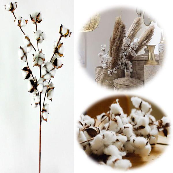 Baumwollzeig Trockenstrauß 70-80cm Braun Naturprodukt Boho Trockenblumen
